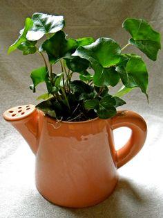 Orange Watering Can Planter