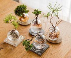 What is better than a bonsai tree? Well, a bonsai that floats . What is better than a bonsai tree? Well, a bonsai that floats Mini Bonsai, Indoor Bonsai, Bonsai Plants, Indoor Plants, Mini Plants, Bonsai Trees, Garden Terrarium, Bonsai Garden, Succulents Garden