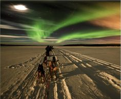 Dog sled races under the Northern Lights