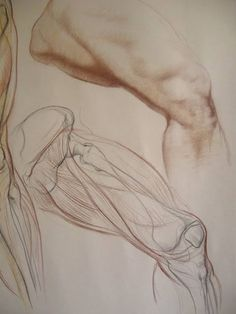 VK is the largest European social network with more than 100 million active users. Figure Sketching, Figure Drawing Reference, Anatomy Reference, Leg Anatomy, Anatomy Study, Human Anatomy Drawing, Human Body Anatomy, Body Sketches, Anatomy Sketches