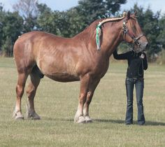 The Suffolk Punch registry is the oldest English breed society. The first known…