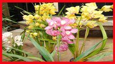 Os 3 Erros Mais Comuns no Cuidado Com Orquídeas - Como Cuidar de Orquideas