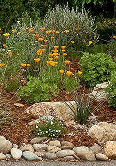 Ideas for natural landscape design drought tolerant Drought Resistant Plants, Drought Tolerant Landscape, Landscaping With Rocks, Front Yard Landscaping, Landscaping Ideas, Arizona Landscaping, Hillside Landscaping, Farmhouse Landscaping, Landscape Design