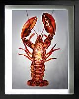 Ocean Life Xray Art