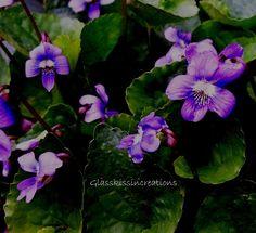 """Violets Aren't Blue- Fine Art Photography Print 8x12"""". $25.00, via Etsy."""