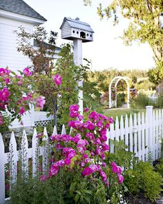 Quintessential country - white picket fence, flower border, climbing rose, and a bird house.