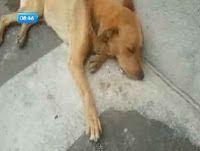 """""""O GRITO DO BICHO"""": Preocupada com o estado de saúde do cachorro, uma ..."""