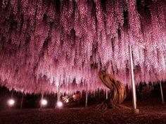Υπάρχουν πολλοί λόγοι για τους οποίους αγαπάμε τα δέντρα: βοηθούν στην παραγωγή του οξυγόνου που...