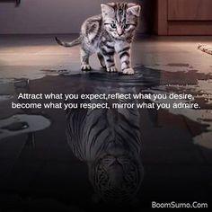 #motivationalquotes #motivation #life #qutoes #startup #entrapeneur #buisness #people #love #kitten #cat