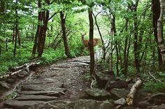 White Dot Trail on Mt. Monadnock in New Hampshire