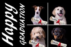 Puppy School, Resolutions, Cute Puppies, Pin Up, Group, Board, Dogs, Life, Animals