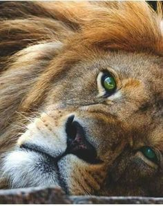 I will pet one's mane in my lifetime!