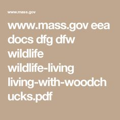 www.mass.gov eea docs dfg dfw wildlife wildlife-living living-with-woodchucks.pdf
