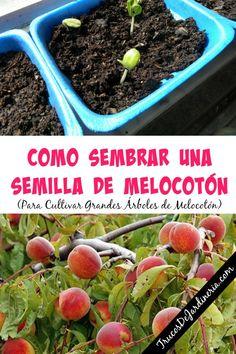 Gardening Ideas, Tips & Techniques Planting Vegetables, Organic Vegetables, Growing Vegetables, Leaf Vegetable, Starting A Garden, Ornamental Plants, Growing Plants, Fruit Trees, Garden Planning