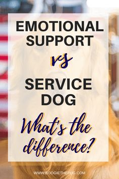 Emotional Support Animal vs Service Animal: What's the Difference? - Boogie the Pug Service Dog Patches, Service Dogs, Cat Care Tips, Dog Care, Pet Tips, Allergic To Dogs, Pet Travel, Travel Tips, Emotional Disorders