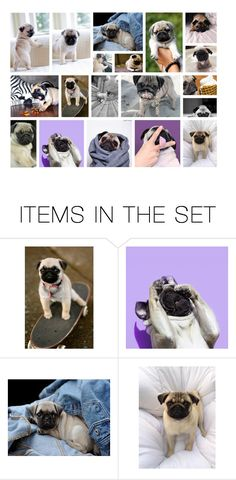 """""""Pugs!!!!!!!!! 😍😍😍😍😍😍😍😍"""" by lolgirl07 ❤ liked on Polyvore featuring art and collagesbyace"""