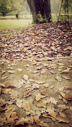 #park #fog #leafs #beautiful #calm