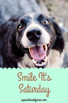 Smile It's Saturday Your Dog, Smile, Dogs, Animals, Animales, Animaux, Pet Dogs, Doggies, Animal