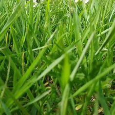 #wild #wildatlantic #wildatlanticway #wildatlanticwaycork #wildgrass #wildnature #wilderness #wildlife #wildflowers #meadow #meadows #meadowflowers #meadowlands #meadowsmovement #meadowgarden #meadowbank #meadowland #cork  #meadowgardens #gardenmeadow #garden #gardens #gardener #gardeners #gardening #grow #growth #growing #flora #nature Meadow Garden, Garden S, Meadow Flowers, Wildflowers, Wild Atlantic Way, Wild Grass, Wild Nature, Wilderness, Cork
