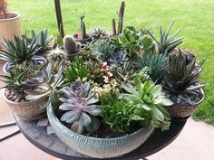 Succulent containers look great grouped together.