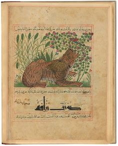 The Morgan Library & Museum Online Exhibitions - Treasures of Islamic Manuscript Painting from the Morgan - Tiger