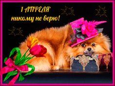 1 Апреля никому не верю   http://mmuzq.ru/muz/smeh2.html