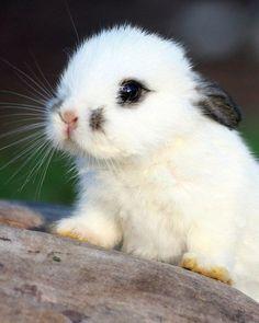 #pic #pics #cuteanimalspics #cute #animals