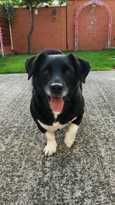#dog #rescuedog #dogsofinstagram#dogstrust #happyboy