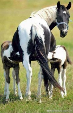 Horse and pasture ~ Mare and foals.