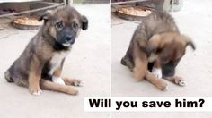 Paralysed puppy left dumped on the streets to fend for himself! Will you help him?