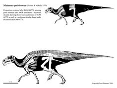 maiasaura peeblesorum skeletaldrawing.com Scott Hartman