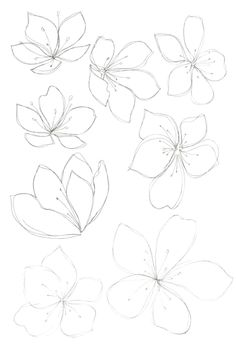 new Ideas flowers drawing design new Ideas flowers drawing design plants Cherry sakura blossom floral seamless pattern Vector Image Bobbie Print: Flower drawings - - Drawing Step By Step Butterfly Tutorials 43 Ideas Spring cherry blossom wallpaper Flower Pattern Drawing, Floral Drawing, Drawing Flowers, Flower Drawings, Flower Drawing Tutorials, Flower Design Drawing, Flowers To Draw, Hibiscus Flower Drawing, Doodle Flowers
