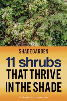 Find out which bushes to plant under trees in the shade garden in your backyard or front yard. These shrubs will help to brighten up your yard. #fromhousetohome #bushes #shade #gardeningtips #gardening #gardenideas Shade Loving Shrubs, Shade Shrubs, Shade Garden Plants, Shade Perennials, Summer Plants, Garden Shrubs, Plants Under Trees, Trees And Shrubs, Evergreens For Shade