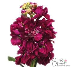 19 best stock flowers images on pinterest stock flower bright we offer our bulk stock flowers in a variety of vibrant colors like pink red lavender yellow assorted and more mightylinksfo