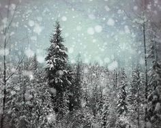 Winter Photography 8x10, Black and Blue Wall Art, Night Woodland Photo, Ski Lodge Decor, Snowflake Picture, Forest Photograph, Christmas Ar. $25.00, via Etsy.