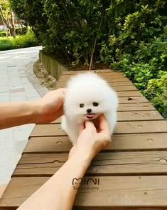 Cute Small Animals, Cute Small Dogs, Cute Baby Dogs, Small Puppies, Cute Funny Animals, Cute Baby Animals, Animals Beautiful, Animals And Pets, Cute Puppies