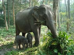 Orang National Park - in Guwahati, Assam, India