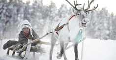 Snow sleighs and reindeer at Jokkmokk Winter Market in Sweden