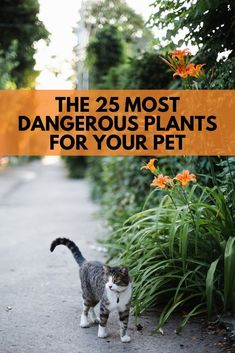Keep your pets away from these common indoor and outdoor plants that are toxic for cats and dogs. Harmful Plants, Toxic Plants For Cats, Cat Plants, Poisonous Plants, Common Garden Plants, Backyard Plants, Landscaping Plants, Outdoor Plants, Keep Cats Away