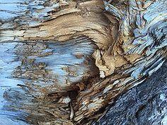 Descargar foto gratis de una corteza de árbol > http://imagenesgratis.eu/corteza-de-arbol/