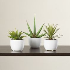Found it at AllModern - 3 Piece Southwest Desk Top Plant in Pot