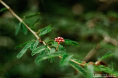 NATURE自然