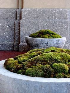 mounded moss planter