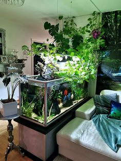 How To Aquarium Fisheries?