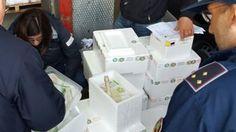 Campania: #Mozzarelle #novive e #contraffazione del marchio DOP: arresti e sequestri (link: http://ift.tt/2kVyiXO )