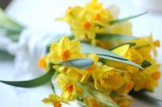 Wild daffodil bouquet - Chelsea Fuss of {Frolic}