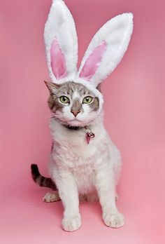 hes filling in for the easter bunny this year. so sweet. Easter Cats, Easter Bunny, Happy Easter, Crazy Cat Lady, Crazy Cats, I Love Cats, Cool Cats, Pet Shop, Gato Animal