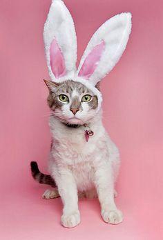 Easter kitty!