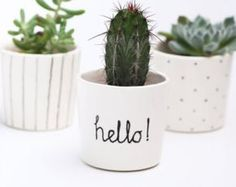A cactus is a superb means to bring in a all-natural element to your house and workplace. The flowers of several succulents and cactus are clearly, their crowning glory. Cactus can be cute decor ideas for your room. Mini Cactus Plants, Small Potted Plants, Indoor Plant Pots, Cactus Flower, Flower Pots, Cactus Pot, Indoor Cactus, Small Cactus, Hanging Plants