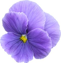 natali_chic_flower12.png